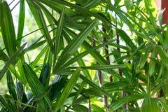 Τροπικό τοπίο κήπων σε μια βίλα πολυτέλειας στο νησί του Μπαλί, Ινδονησία όμορφος πράσινος ανασκόπησης Στοκ Εικόνα
