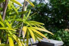 Τροπικό τοπίο κήπων σε μια βίλα πολυτέλειας στο νησί του Μπαλί, Ινδονησία όμορφος πράσινος ανασκόπησης Στοκ φωτογραφίες με δικαίωμα ελεύθερης χρήσης