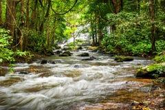 Τροπικό τοπίο τροπικών δασών με το ρέοντας ποταμό Ταϊλάνδη Στοκ Εικόνα