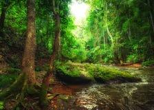Τροπικό τοπίο τροπικών δασών με το ρέοντας ποταμό Ταϊλάνδη Στοκ Εικόνες