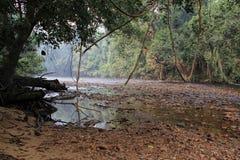 Τροπικό τοπίο τροπικών δασών, Taman Negara Pahang Μαλαισία Στοκ Εικόνες