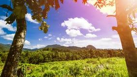 Τροπικό τοπίο, τοπίο τροπικών δασών, θερινό τοπίο, όμορφο τοπίο στοκ φωτογραφίες με δικαίωμα ελεύθερης χρήσης