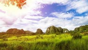 Τροπικό τοπίο, τοπίο τροπικών δασών, θερινό τοπίο, όμορφο τοπίο στοκ εικόνα με δικαίωμα ελεύθερης χρήσης