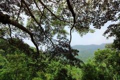 Τροπικό τοπίο τροπικών δασών στο πάρκο natuonal Doi Inthanon, Chaingmai, Ταϊλάνδη Στοκ εικόνα με δικαίωμα ελεύθερης χρήσης