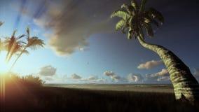 Τροπικό τοπίο, φοίνικες που φυσά στον αέρα, υδρονέφωση πρωινού ελεύθερη απεικόνιση δικαιώματος