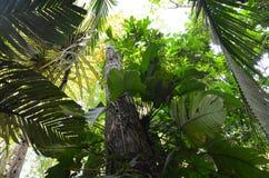 Τροπικό τροπικό δάσος της Κόστα Ρίκα Στοκ Φωτογραφία