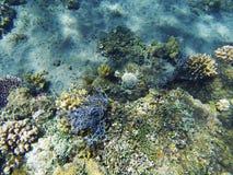 Τροπικό υποβρύχιο τοπίο ακτών Διαφορετικές μορφές κοραλλιογενών υφάλων Στοκ Φωτογραφίες