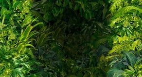 Τροπικό υπόβαθρο ζουγκλών στοκ φωτογραφία με δικαίωμα ελεύθερης χρήσης
