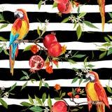 Τροπικό υπόβαθρο λουλουδιών, ροδιών και πουλιών παπαγάλων Στοκ Φωτογραφίες