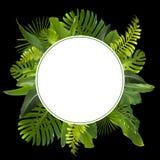 Τροπικό υπόβαθρο φύλλων ζουγκλών Στοκ Εικόνες