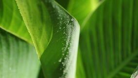 Τροπικό φύλλο με την υγρασία απόθεμα βίντεο