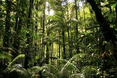 τροπικό δάσος Στοκ Φωτογραφία