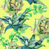 Τροπικό aloe φύλλων της Χαβάης σχέδιο δέντρων σε ένα ύφος watercolor Στοκ εικόνες με δικαίωμα ελεύθερης χρήσης