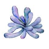 Τροπικό aloe φύλλων της Χαβάης δέντρο σε ένα ύφος watercolor που απομονώνεται Στοκ φωτογραφία με δικαίωμα ελεύθερης χρήσης