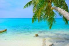 Τροπικό seascape με τα πράσινα φύλλα φοινίκων, την ωκεάνια άποψη με τα vawes και το φοίνικα διακλαδίζεται στοκ φωτογραφία