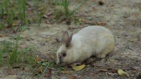 Τροφές λίγων άσπρες κουνελιών απόθεμα βίντεο