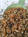 Τροφή κοτόπουλου με τα καβούρια Στοκ φωτογραφία με δικαίωμα ελεύθερης χρήσης