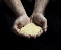 τροφή υπό εξέταση Στοκ Εικόνες