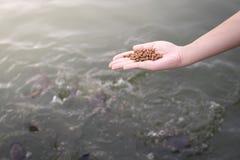 Τροφή ψαριών Στοκ φωτογραφία με δικαίωμα ελεύθερης χρήσης