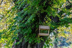 Τροφοδότης πουλιών στο δέντρο στοκ εικόνες