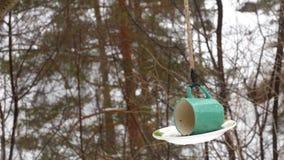 Τροφοδότης πουλιών στο πάρκο φιλμ μικρού μήκους