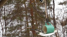 Τροφοδότης πουλιών στο πάρκο απόθεμα βίντεο