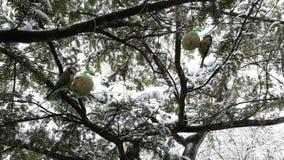 Τροφοδότης πουλιών απόθεμα βίντεο