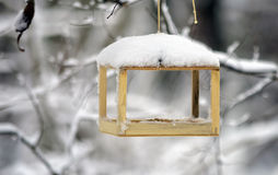 Τροφοδότες πουλιών που κρεμούν σε έναν κλάδο, χιόνι Στοκ Εικόνες