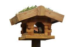 Τροφοδότες πουλιών σπουργιτιών Στοκ Εικόνες