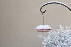 Τροφοδότης κολιβρίων που ολοκληρώνεται με το χιόνι Στοκ Φωτογραφίες