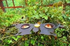 τροφοδότης πεταλούδων Στοκ Εικόνα
