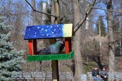 Τροφοδότης 2 πουλιών Στοκ Φωτογραφίες