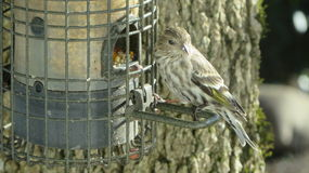 Τροφοδότης πουλιών Στοκ Φωτογραφίες