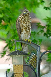 Τροφοδότης πουλιών; Στοκ φωτογραφία με δικαίωμα ελεύθερης χρήσης