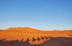 Τροχόσπιτο καμηλών που περνά από τους αμμόλοφους άμμου στην έρημο Σαχάρας Στοκ Εικόνα