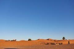Τροχόσπιτο καμηλών που περνά από τους αμμόλοφους άμμου στην έρημο Σαχάρας Στοκ Φωτογραφίες