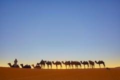 Τροχόσπιτο καμηλών που περνά από τους αμμόλοφους άμμου στην έρημο Σαχάρας Στοκ Εικόνες