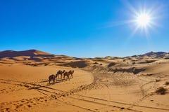 Τροχόσπιτο καμηλών που περνά από τους αμμόλοφους άμμου στην έρημο Σαχάρας Στοκ εικόνες με δικαίωμα ελεύθερης χρήσης