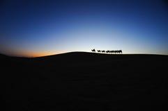Τροχόσπιτο καμηλών στην αυγή ερήμων Στοκ Εικόνα