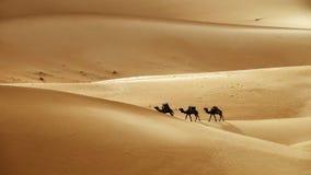 Τροχόσπιτο καμηλών στους αμμόλοφους άμμου ερήμων Στοκ φωτογραφίες με δικαίωμα ελεύθερης χρήσης