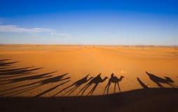 Τροχόσπιτο καμηλών σκιών στην άμμο ερήμων Στοκ Εικόνες