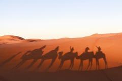 Τροχόσπιτο καμηλών στην έρημο Σαχάρας, Μαρόκο Στοκ Φωτογραφίες
