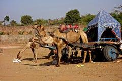 Τροχόσπιτο Pushkar, Rajasthan καμηλών στοκ φωτογραφία με δικαίωμα ελεύθερης χρήσης