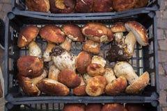 Τρούφες και ιταλικές λιχουδιές Ιταλία Ευρώπη μανιταριών στοκ εικόνα