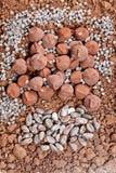 τρούφες σοκολάτας και φασόλια κακάου στο κακάο στοκ φωτογραφία