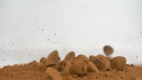 Τρούφες σοκολάτας κακάου που εμπίπτουν στη σκόνη κακάου στο λευκό φιλμ μικρού μήκους