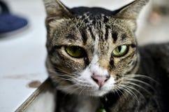 τρυπημένη γάτα Στοκ εικόνες με δικαίωμα ελεύθερης χρήσης