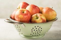 Τρυπητό με τα ώριμα κόκκινα μήλα Στοκ φωτογραφίες με δικαίωμα ελεύθερης χρήσης