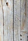Τρυπώντας διαδρομές που γίνονται από τους κανθάρους στα δέντρα πεύκων, Στοκ Φωτογραφία