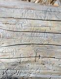 Τρυπώντας διαδρομές που γίνονται από τους κανθάρους στα δέντρα πεύκων, Στοκ Εικόνες